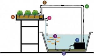 hydroponics 300x178 Gesunde Aussichten