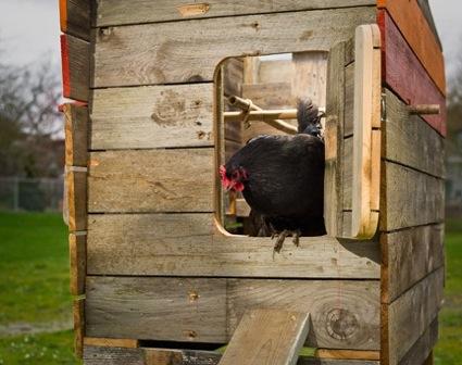 Designer Hühnerstall starkes design für die hühnerschar über land über land