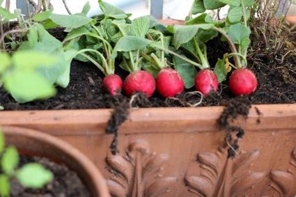 radieschen Tomaten statt Beton