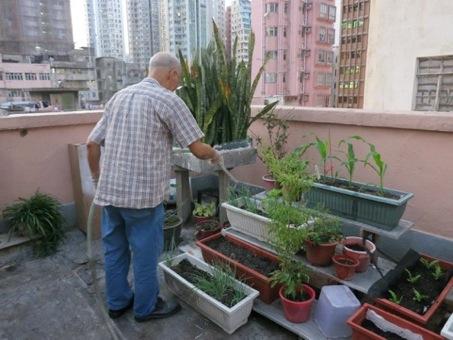 ueberland.10.mobile farm1 Creative Hong Kong (2): Eine UrbanFarm als Zeichen für ein friedliches Miteinander