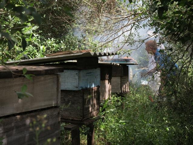 Killerbienen das Ausräuchern