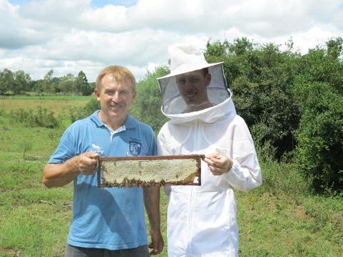 Killerbienen der Imker Benedikt Pestalozzi