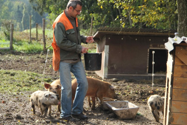 Herbert Schachner und Schweine