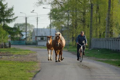 ueberland.Pferdeauftrieb.polen