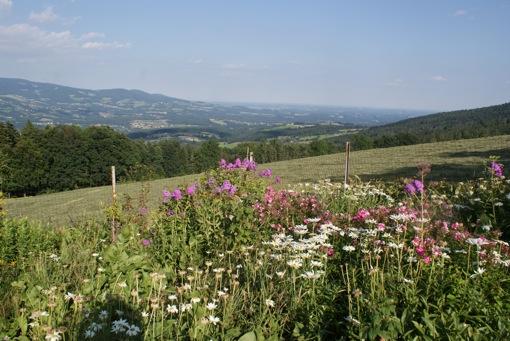 Garten Österreichs Oststeiermark