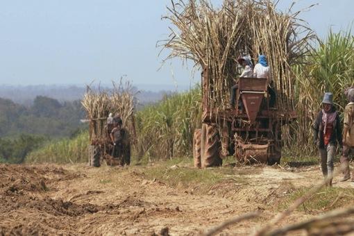 No-Land-No-Food-No-Life_Cambodia2_Copyright-Films-de-lOeil-inc_Credit-Sylvestre-Guidi1