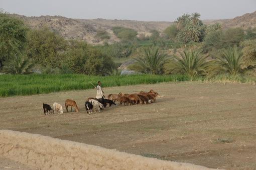 Jungbauern Afrikas