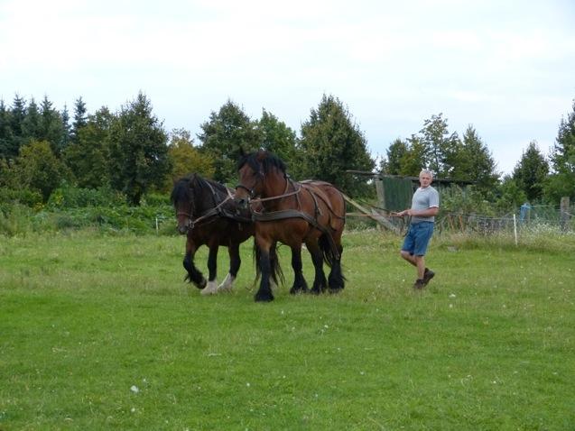 Nils Rosenthal mit den Pferden Rubinia und Elfi nach dem Pflügen.