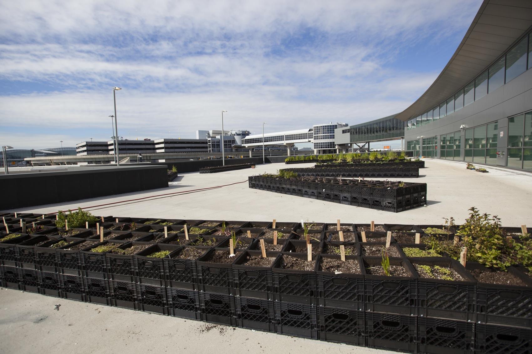 Eine Kartoffel Urban Farm zum Abheben
