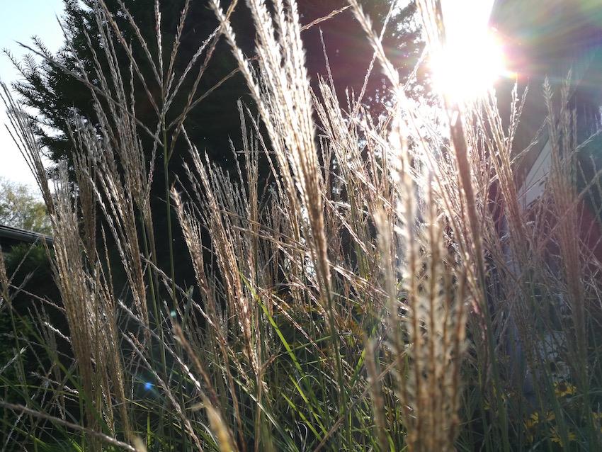 Sanftes Licht für den Garten