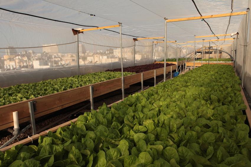 Bauernhof über den Dächern von Tel Aviv