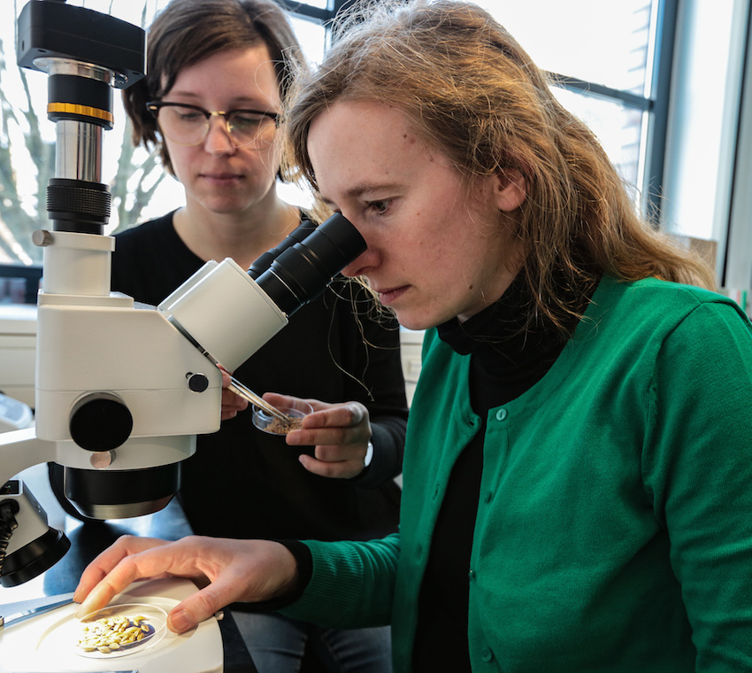 Forscher suchen Alternativen zu Pestiziden