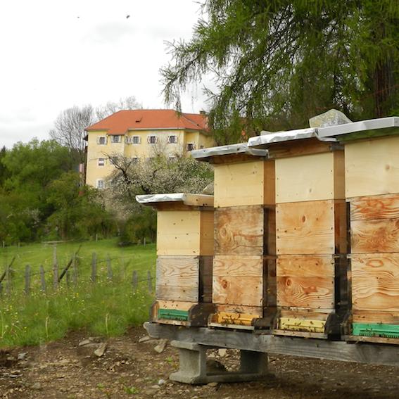 Bienenstock Ausschnitt2 Kopie