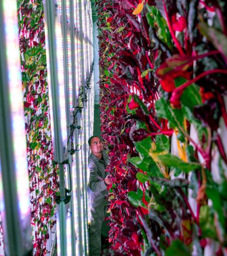 Vertical Farming steht vor dem Durchbruch