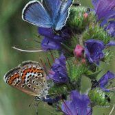 Expedition-Artenvielfalt-Heinz-Sielmann-Stiftung-Schmetterling