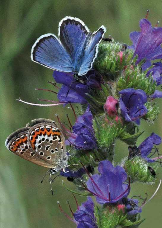 Expedition Artenvielfalt Heinz Sielmann Stiftung Schmetterling