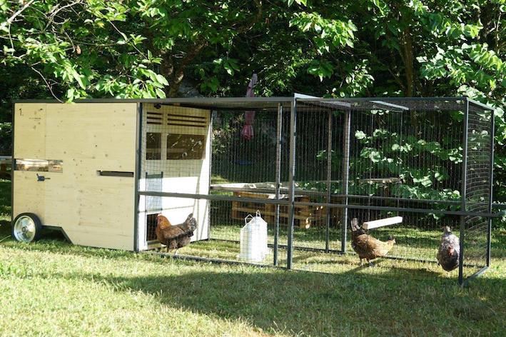 Hühner in der Stadt