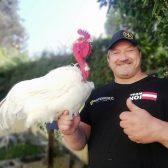 (01) Nutztierrassen des Jahres: Zackelschaf und Nackthalshuhn