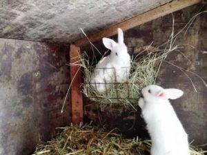 Schweizermichelhof Kaninchen