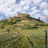 Weingut-Rieger-Weingarten