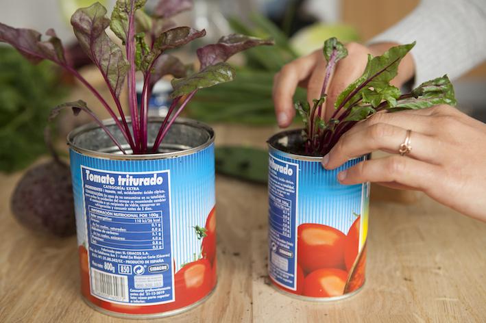 Gemüsereste endlos nachwachsen lassen