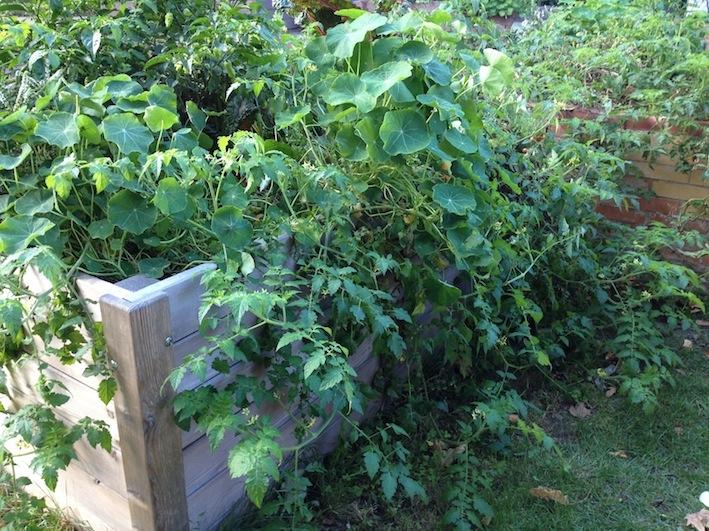 Tipps zum umweltfreundlichen Gärtnern